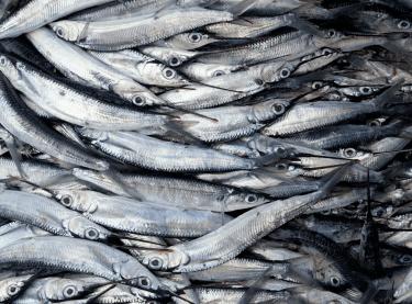 Поставляем рыбную продукцию на рынок Приморского края с 1994 года